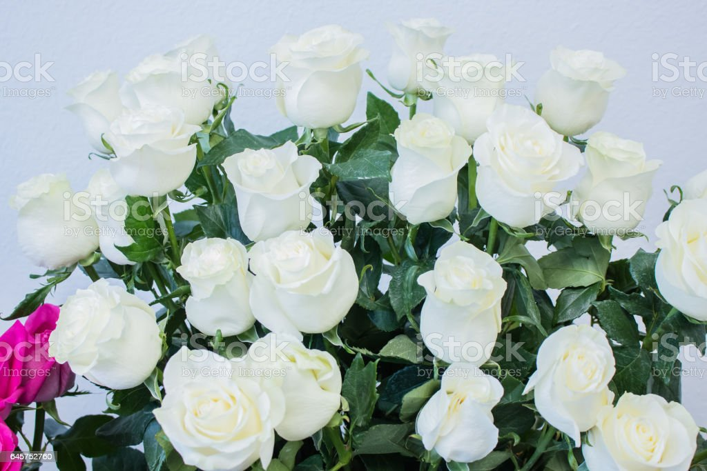 bouquet of large white roses stock photo
