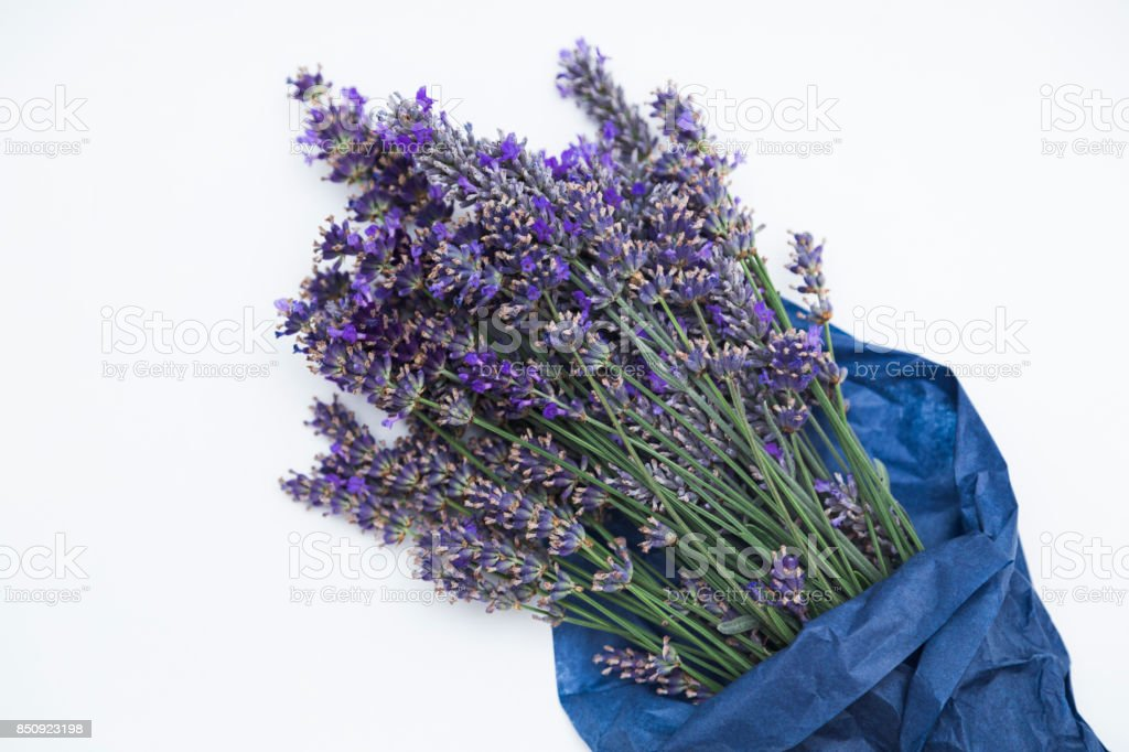 Bouquet of lavender in paper on white background stock photo