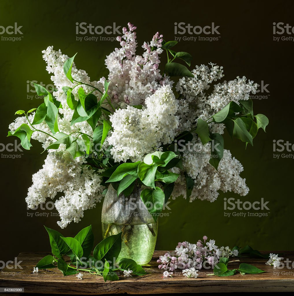 Bouquet of lilac flowers. stock photo