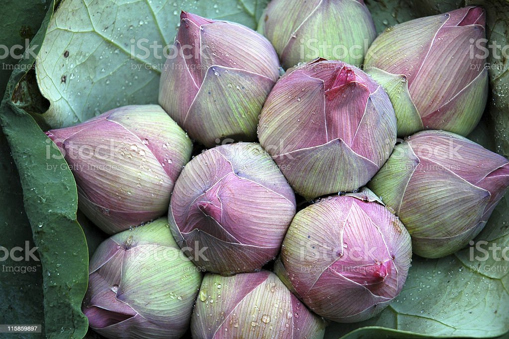 Bouquet of lotus flowers on a market in Bangkok royalty-free stock photo