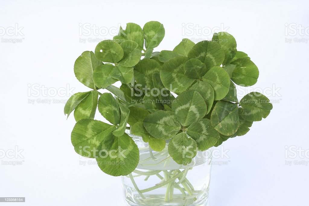 Bouquet of luck royalty-free stock photo