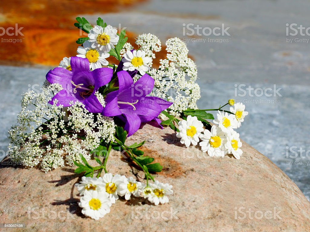 Bouquet of meadow flowers stock photo