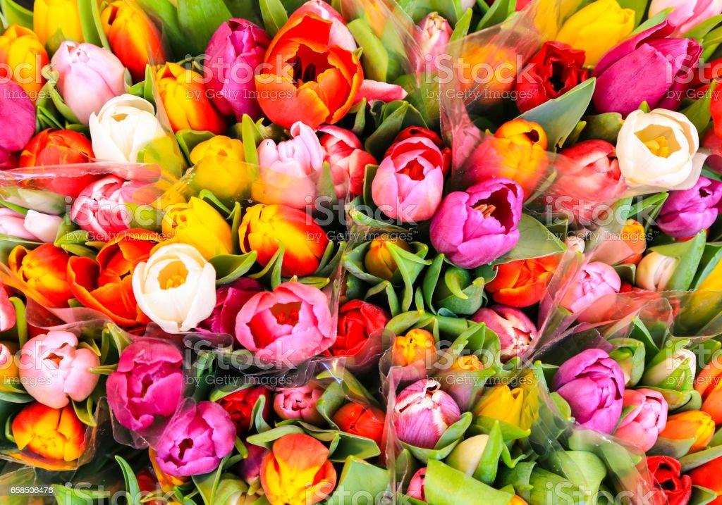 Bouquet of multicolored Tulips stock photo