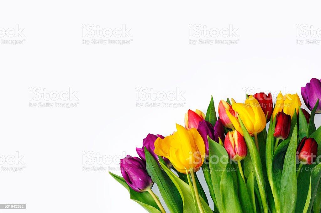 Bouquet of multicoloured tulips on white background. stock photo