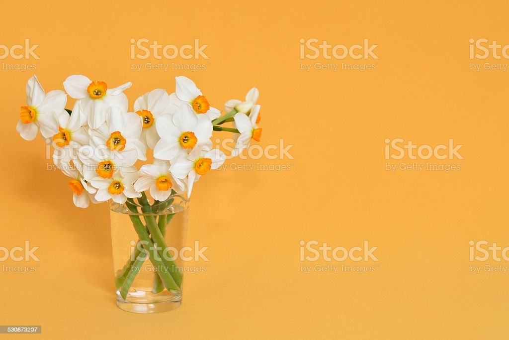bouquet of narcissus stock photo