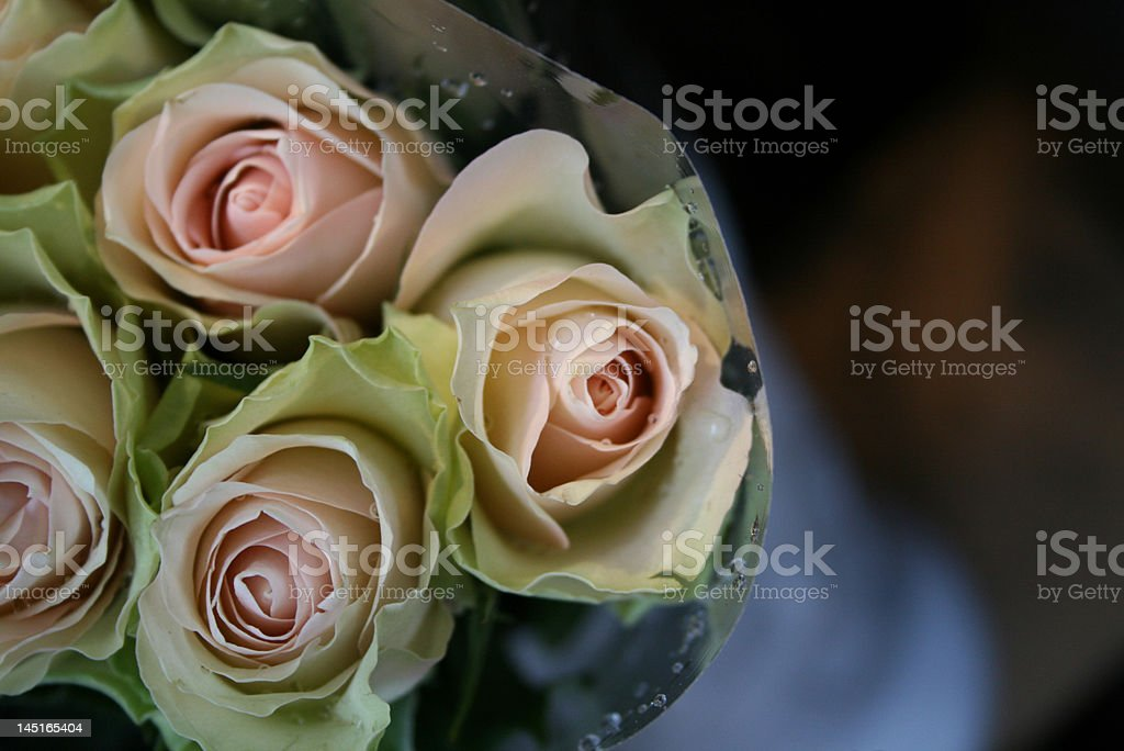 Bouquet of Pale Pink Vintage Roses royalty-free stock photo