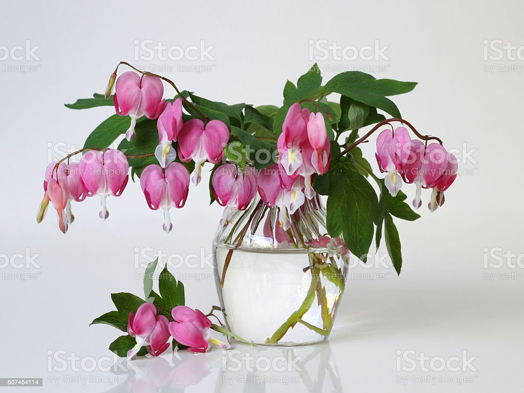 Bouquet of pink bleeding heart flowers in a vase. stock photo