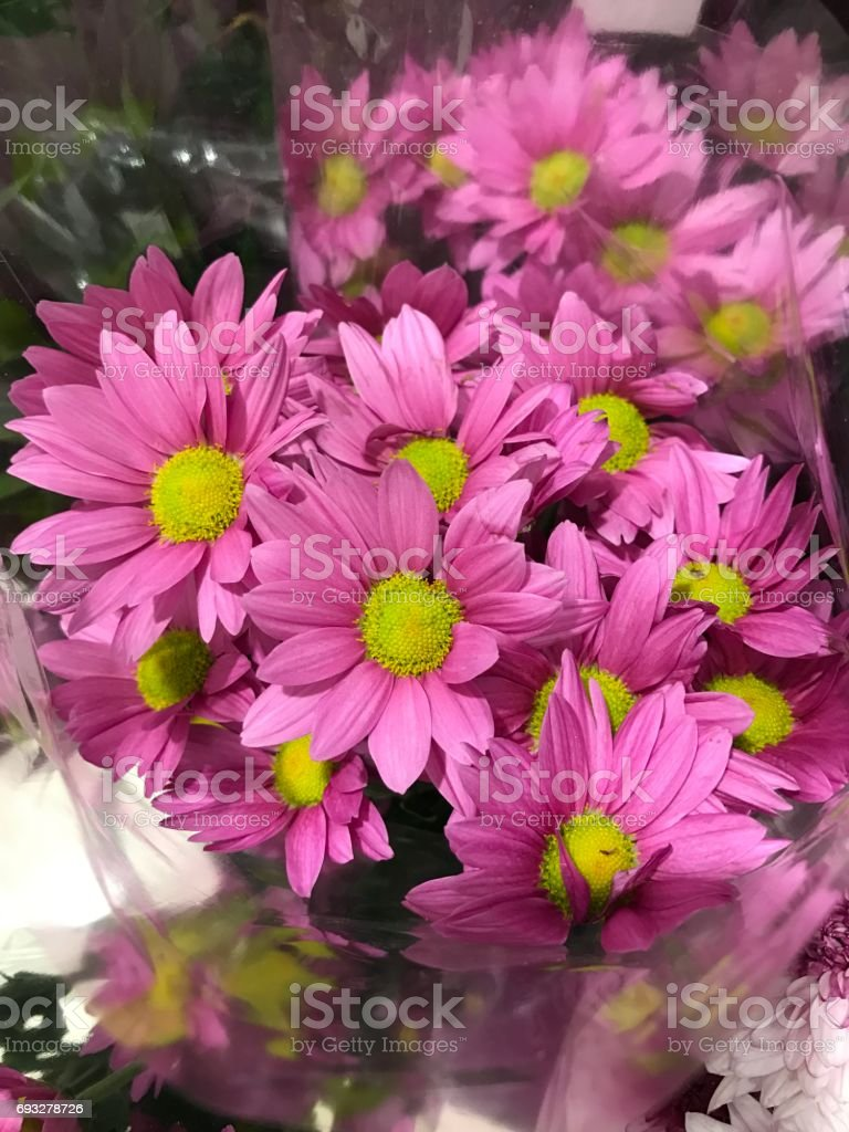 A bouquet of pink daisy flower. stock photo