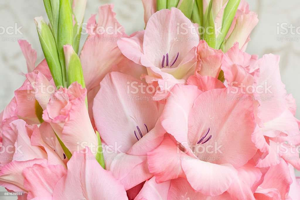 Bouquet of pink gladioli. Pink flowers. stock photo