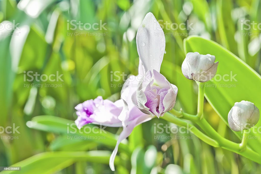 Bouquet of pink orchids royalty-free stock photo