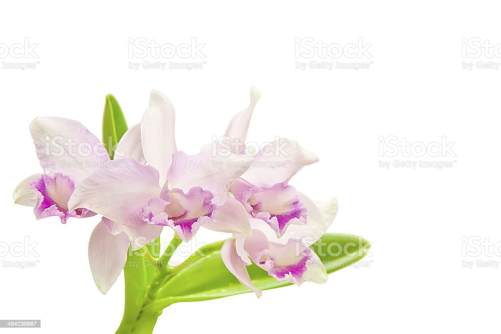 Bouquet of pink orchids stock photo