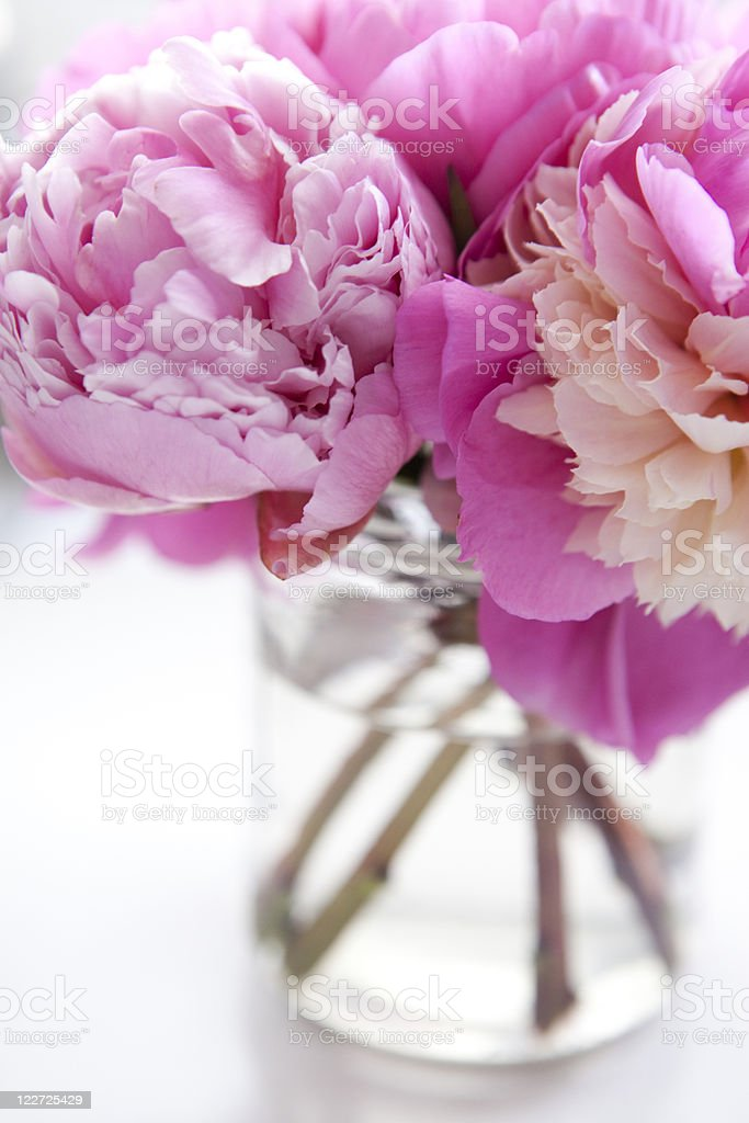 Bouquet of pink peonies in clear glass flower vase royalty-free stock photo