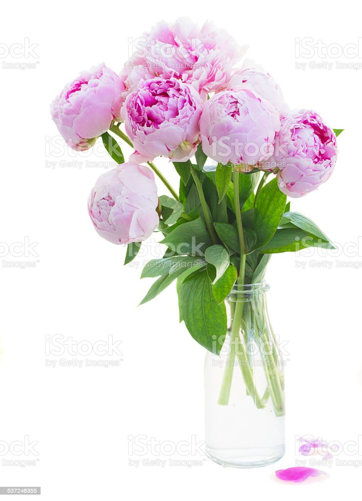 bouquet of pink peonies stock photo