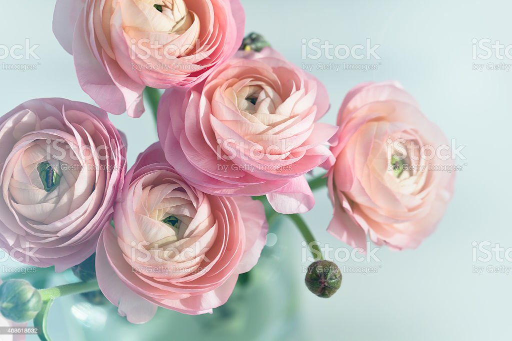 A bouquet of pink roses in a vase  stock photo