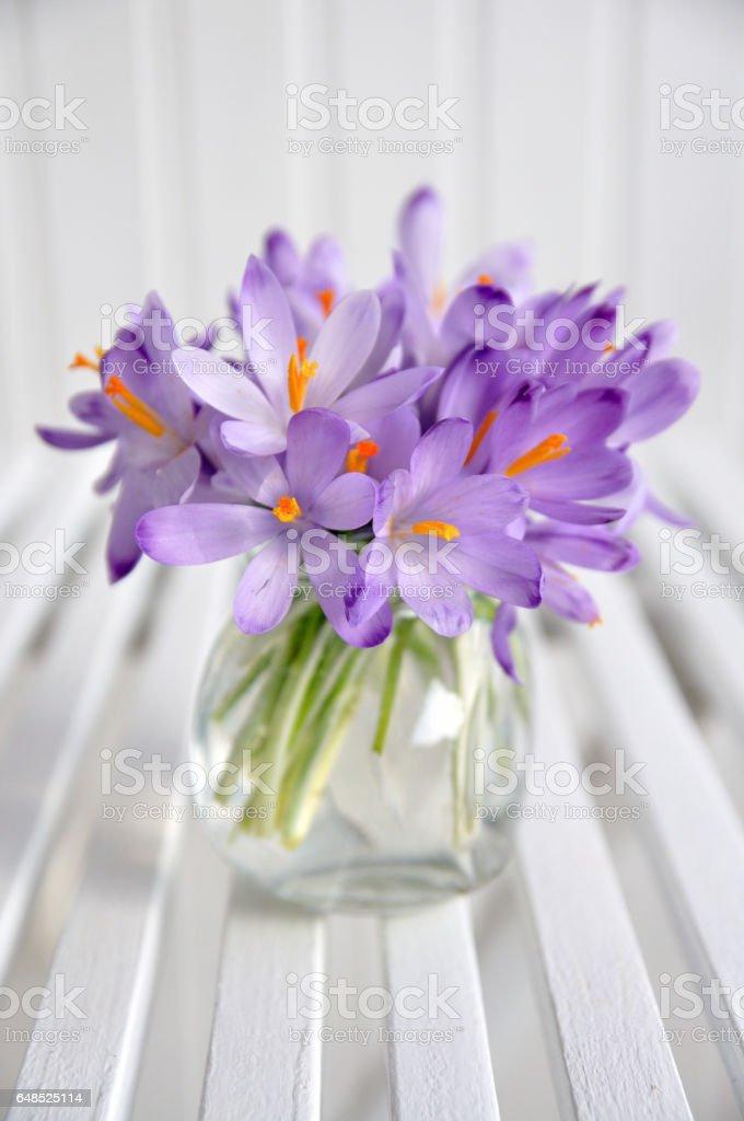 bouquet of purple crocus in vase stock photo