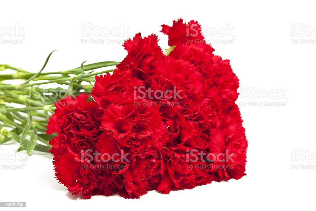 bouquet of red carnations stock photo