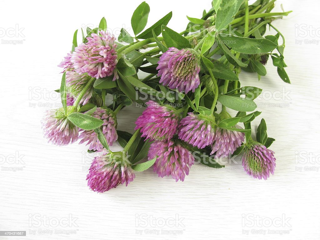Bouquet of red clover stock photo