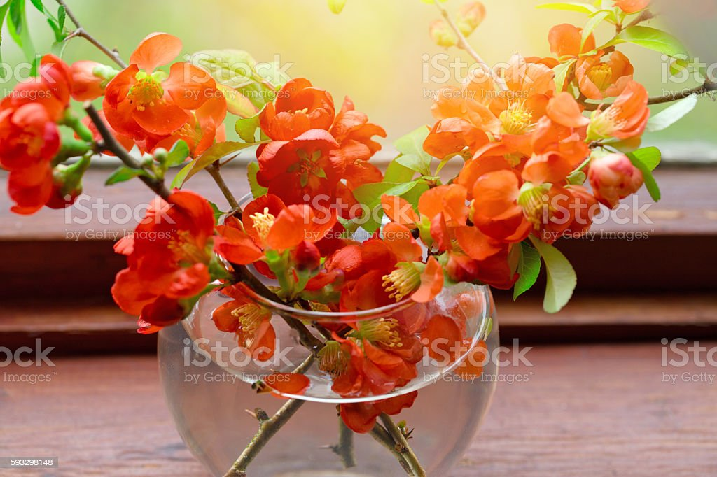 Bouquet of red flowers  in a  vase at a window stock photo