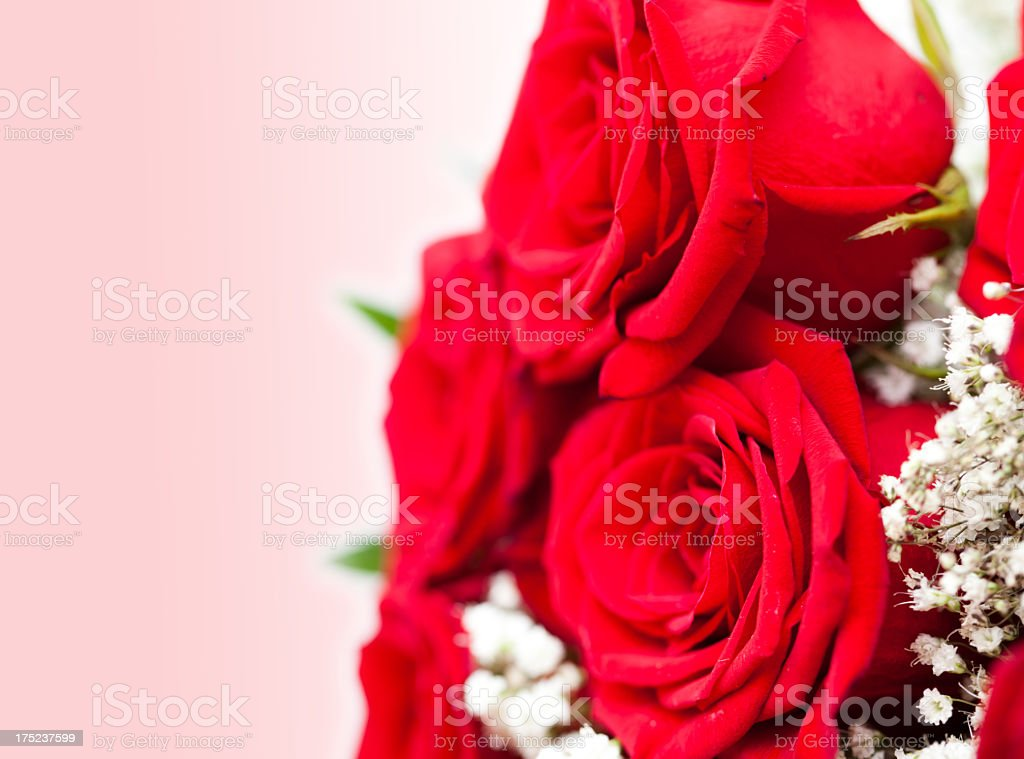 Bouquet of Red Roses on Pink Background royalty-free stock photo
