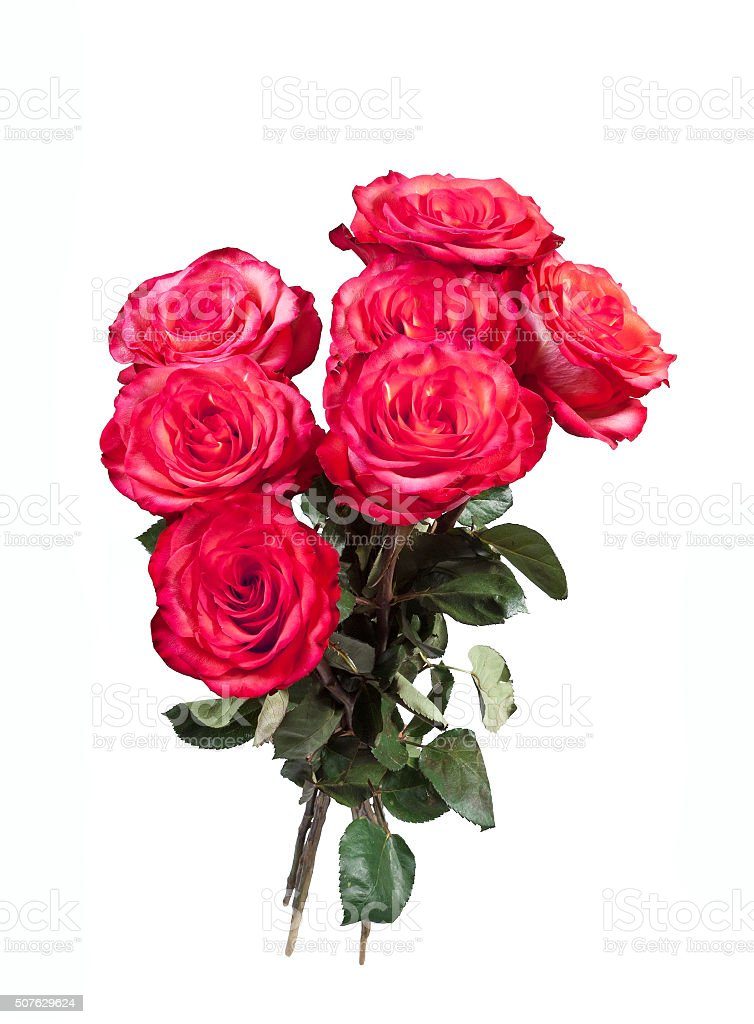 Bouquet of red roses on the white background stock photo
