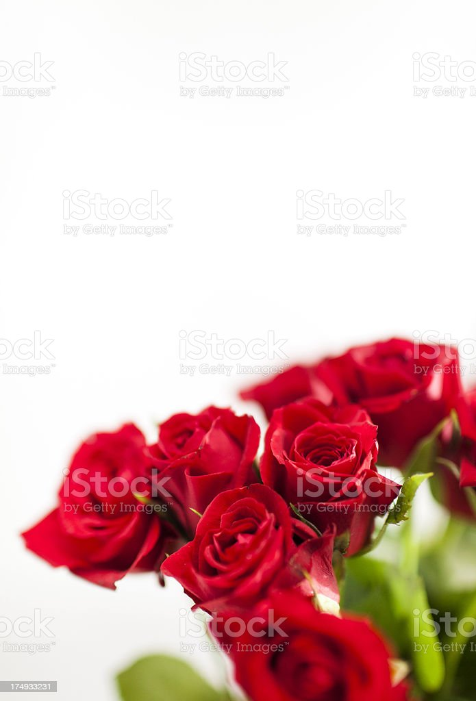A bouquet of red roses with a white background royalty-free stock photo