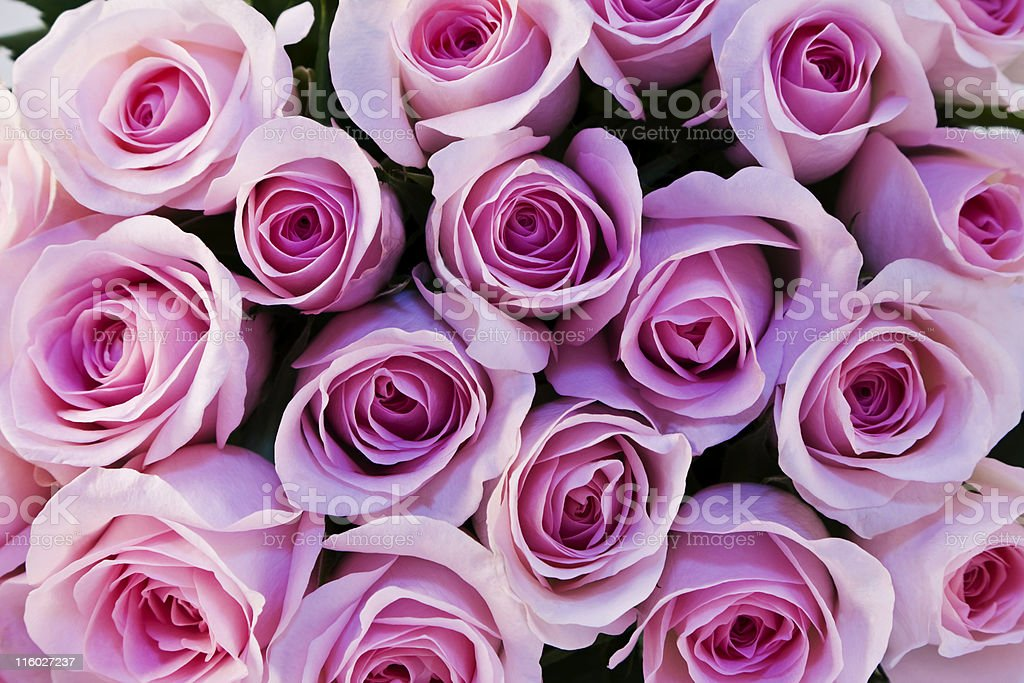 Bouquet of Rose royalty-free stock photo