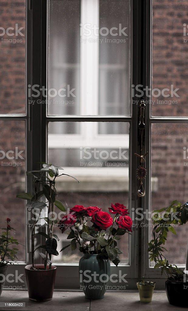Bouquet of Roses on Windowsill stock photo