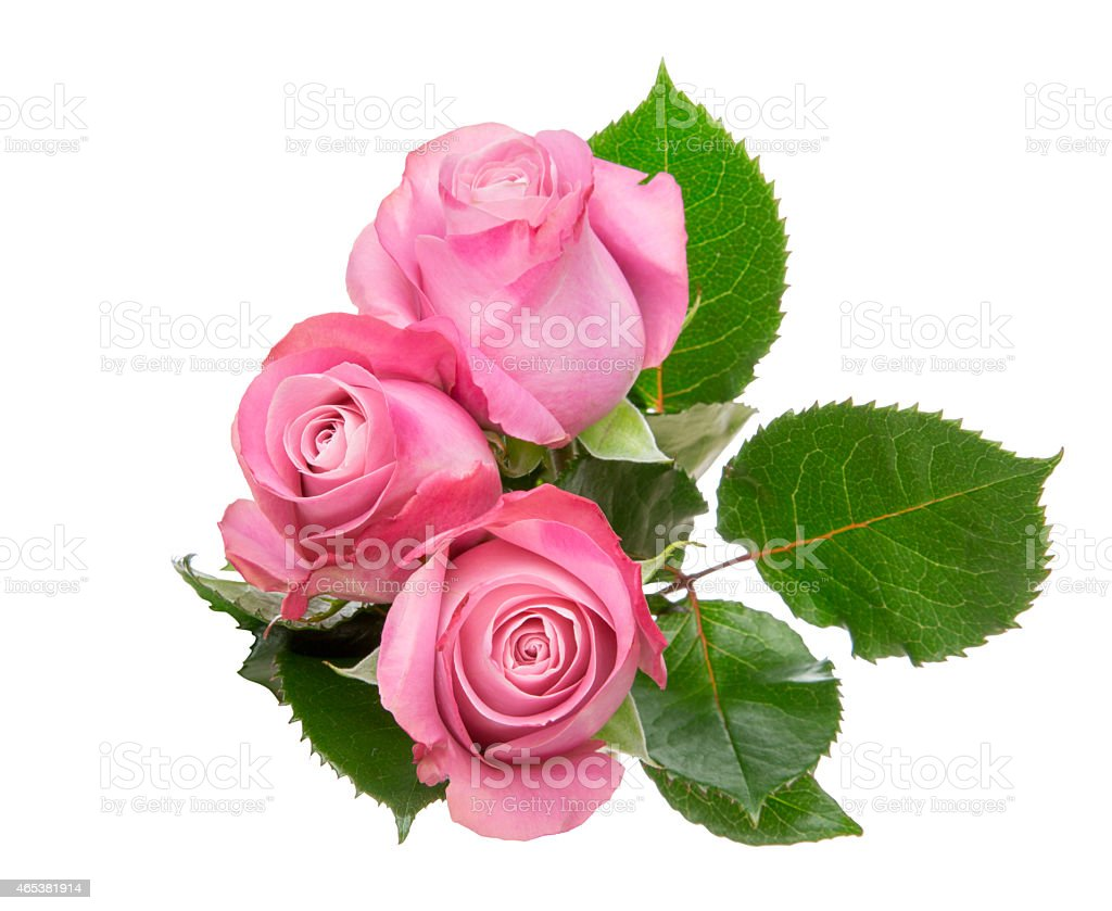 Bouquet of roses with leaves stock photo