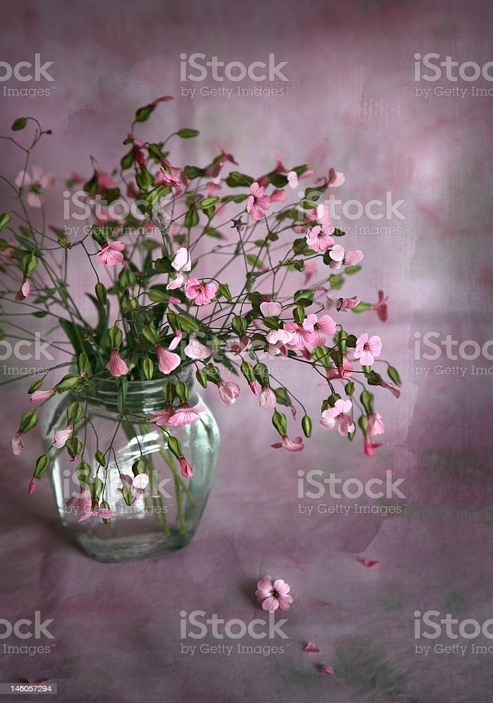 bouquet of small pink flowers royalty-free stock photo