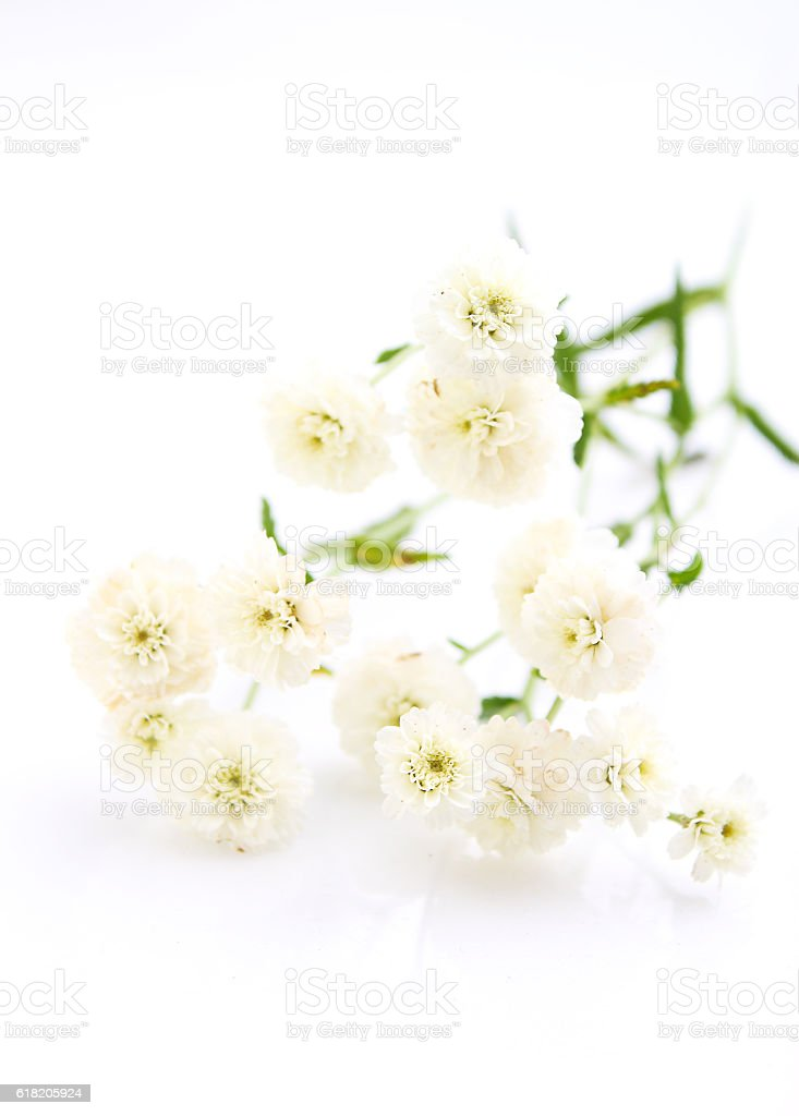 bouquet of small, white flowers on a white background stock photo
