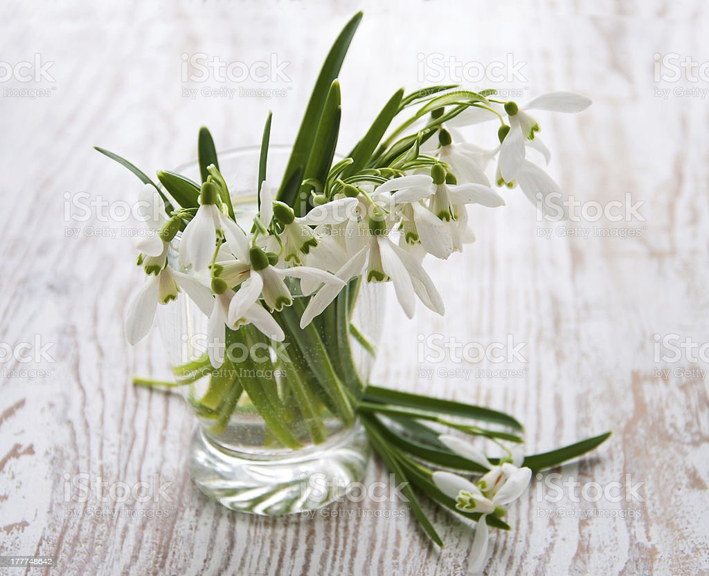 Bouquet of snowdrop flowers royalty-free stock photo