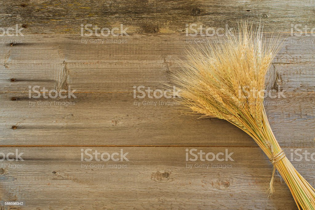 bouquet of spikelets of wheat on the wooden background stock photo