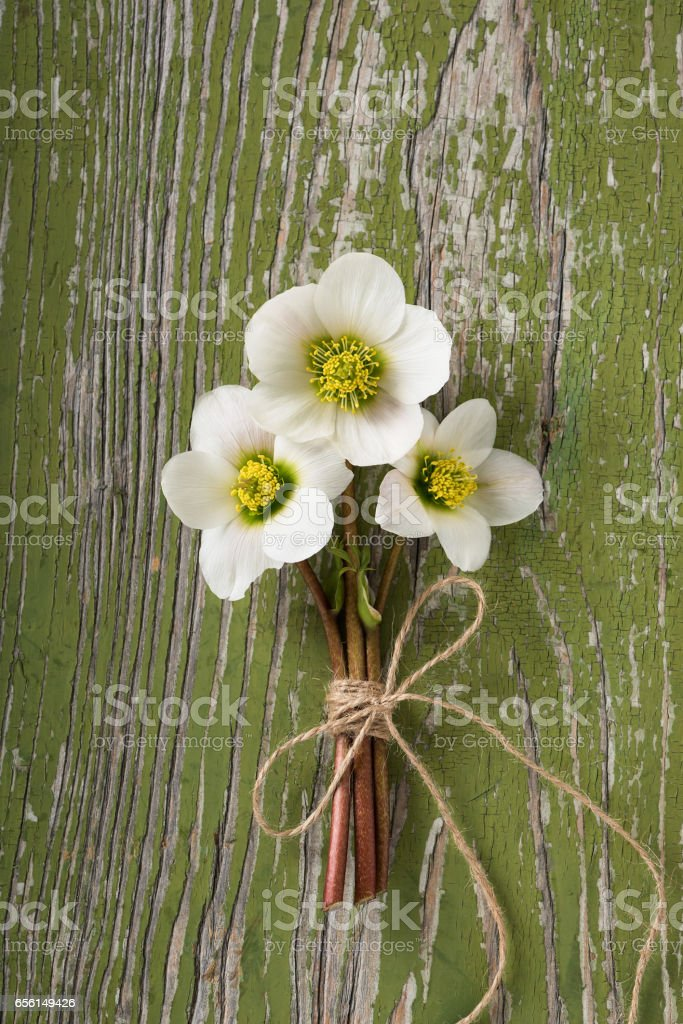 Bouquet of spring hellebore flowers. stock photo