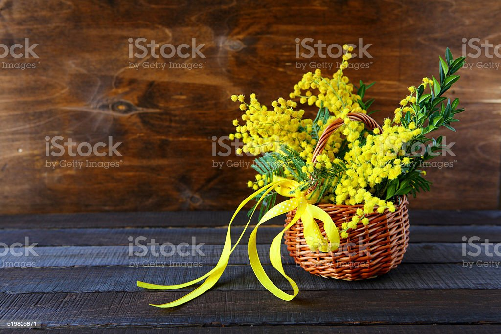 bouquet of spring mimosa stock photo