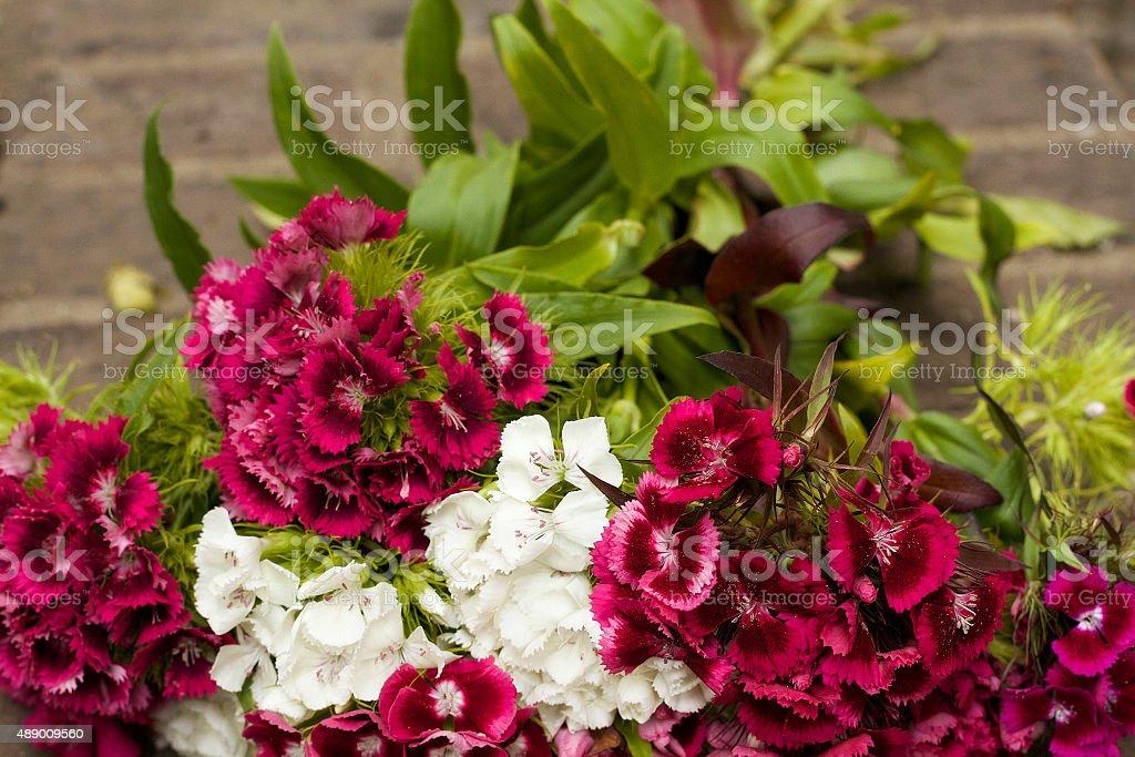 Bouquet di fiori di garofano (Garofano della Cina barbatus foto stock royalty-free
