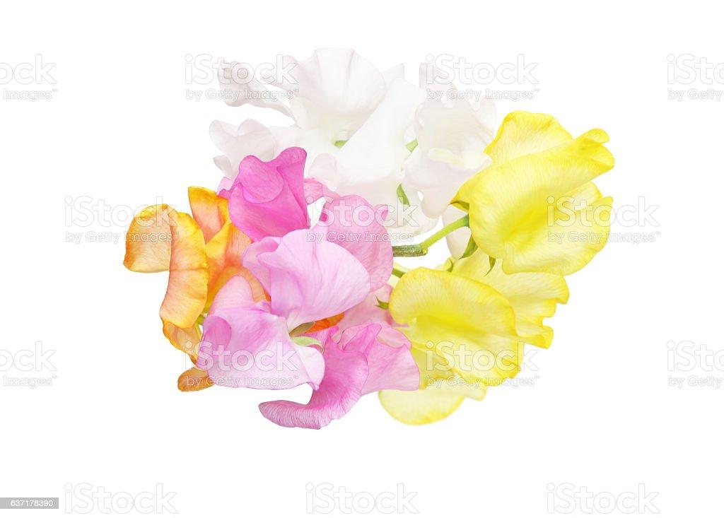 Bouquet of sweetpea stock photo