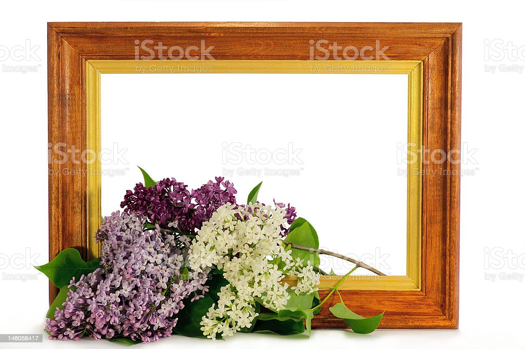 Bouquet of the lilac royalty-free stock photo