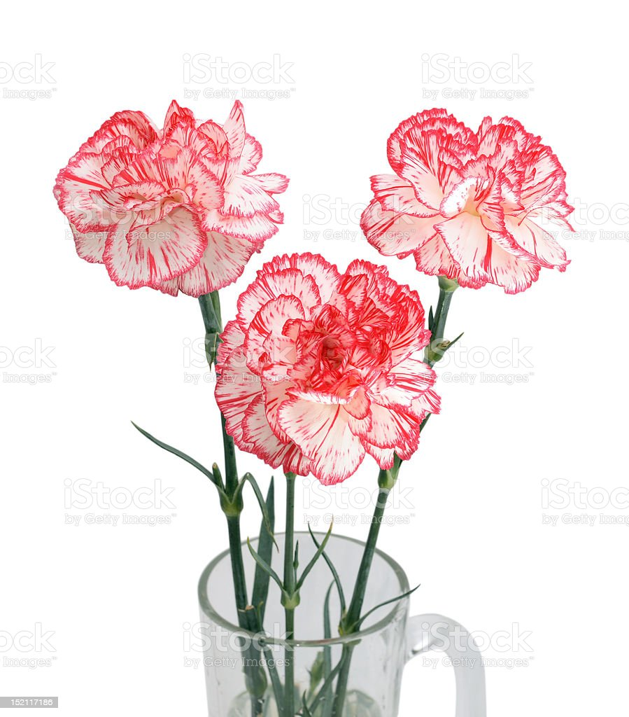 bouquet of three carnations isolated on white stock photo