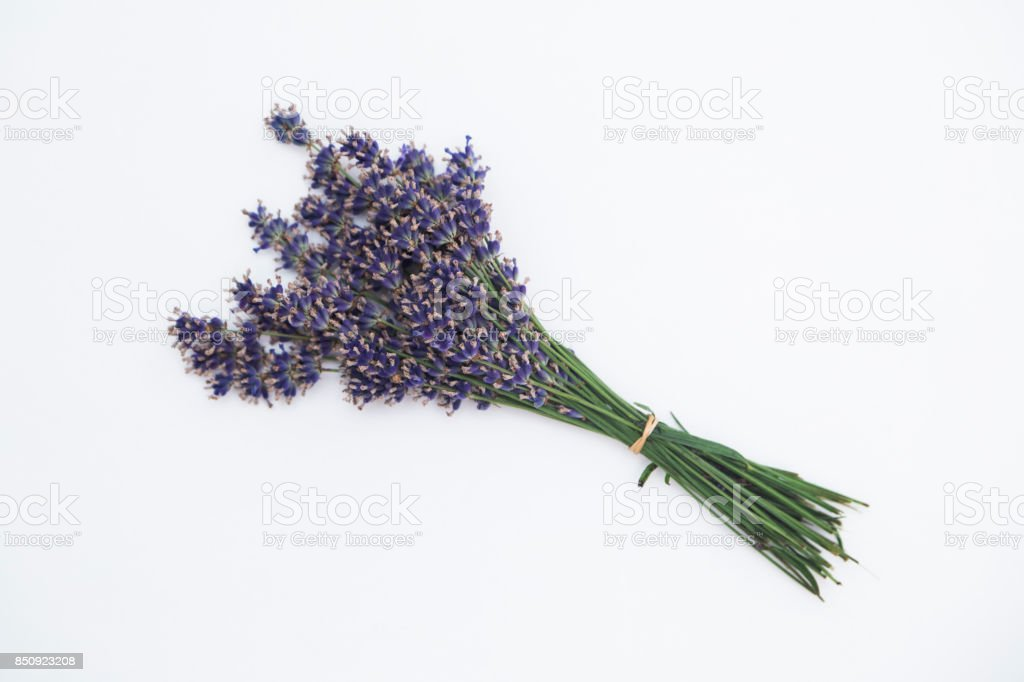 Bouquet of tied lavender on white background stock photo