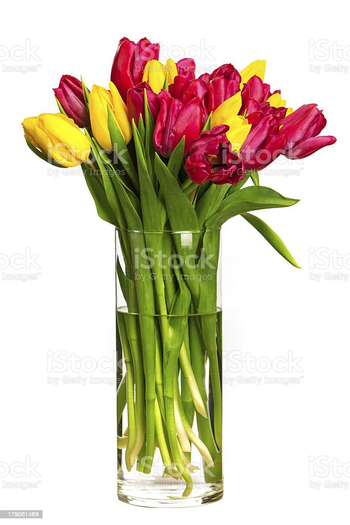 Bouquet of tulips over white royalty-free stock photo