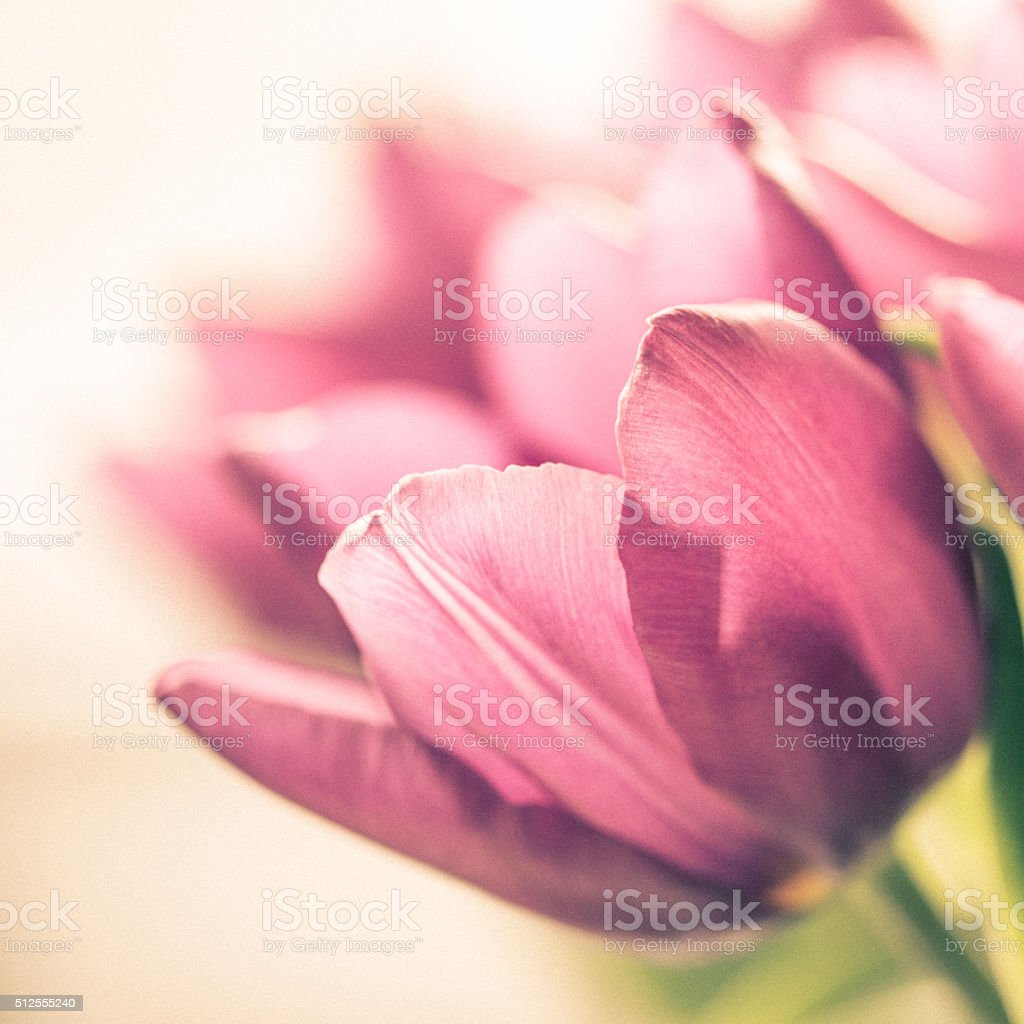 Bouquet of tulips. stock photo