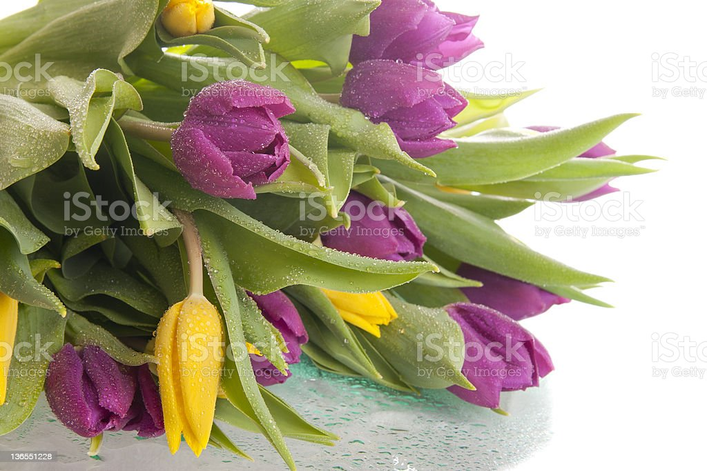 bouquet of violet and yellow tulips royalty-free stock photo