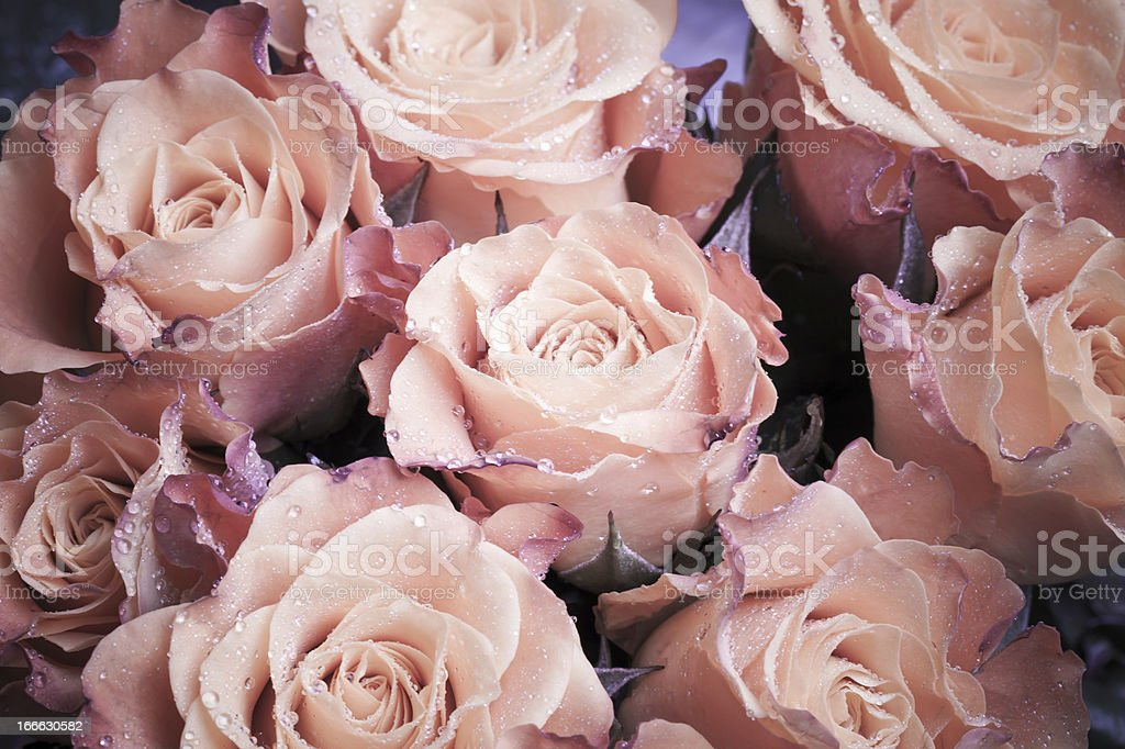 Bouquet of wet pink roses flowers macro photo royalty-free stock photo