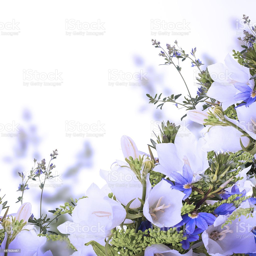 Bouquet of white and blue bells on a white background stock photo