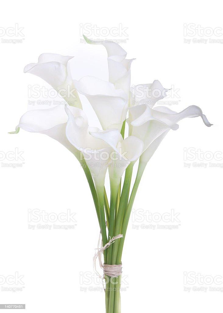 bouquet of white calla lilies stock photo