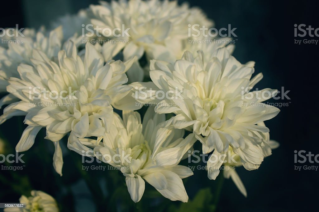 Bouquet of white flowers in the sun rays stock photo