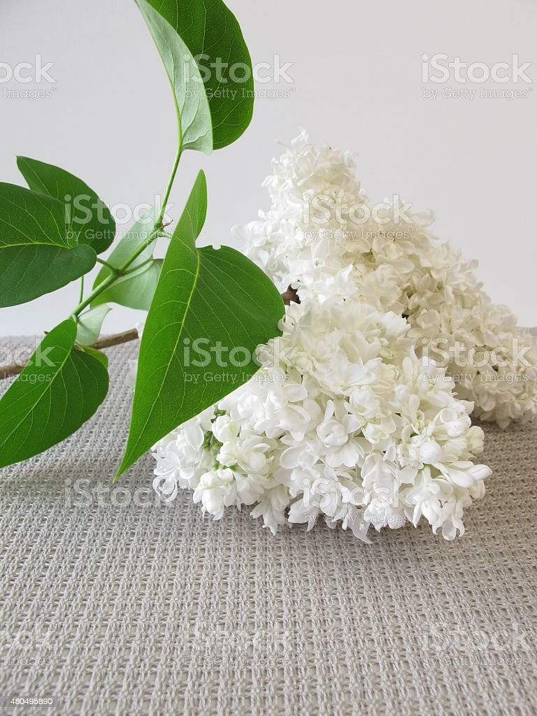 Bouquet of white lilac flowers stock photo