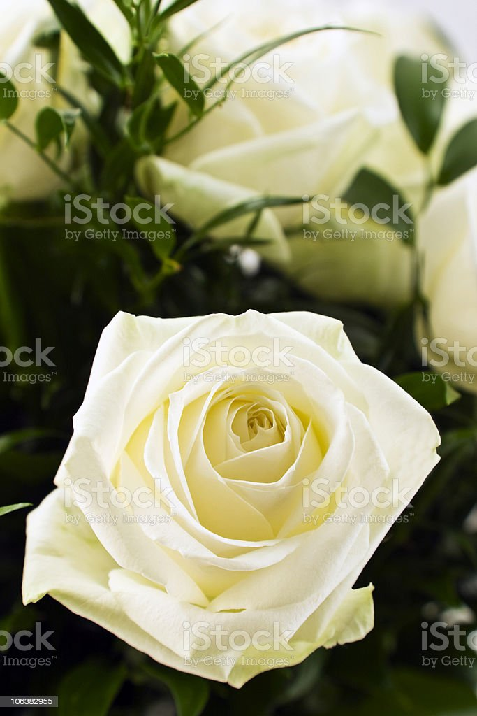 Bouquet of White Rose. Color Image royalty-free stock photo