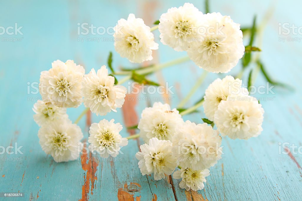 bouquet of white, small flowers on a blue background stock photo