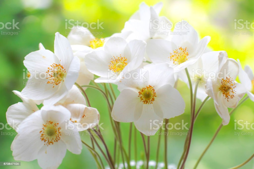 Bouquet of white wildflowers. Fresh flowers. Special occasions. stock photo